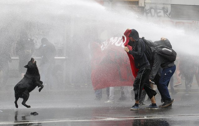 Protesters are hit by a jet of water released from a riot police vehicle during a protest against the government to demand changes and end to the profiteering in the education system, in Valparaiso, May 14, 2015. (Photo by Rodrigo Garrido/Reuters)