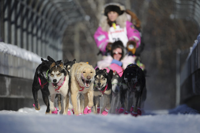 Dee Dee Jonrowe, of Willow, mushes during the ceremonial start of the Iditarod Trail Sled Dog Race in Anchorage, Alaska, Saturday, March 4, 2017. (Photo by Michael Dinneen/AP Photo)