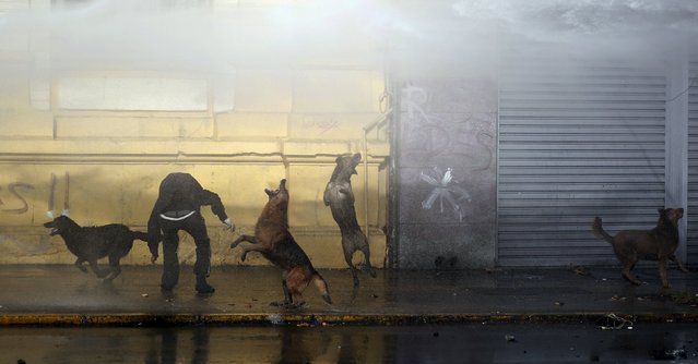 A demonstrator, next to dogs, is hit by a jet of water from a police water cannon, during a protest to demand changes in the Chilean education system in Santiago, Chile June 25, 2015. (Photo by Marcos Brindicci/Reuters)
