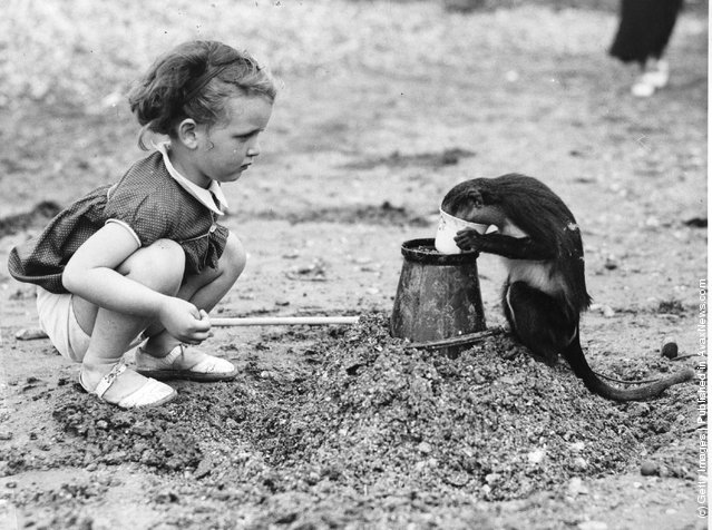 2nd July 1938:  A little girl and her pet monkey play on the 'Sea Salter' beach in Kent. The monkey decided it was time to become King of the Castle
