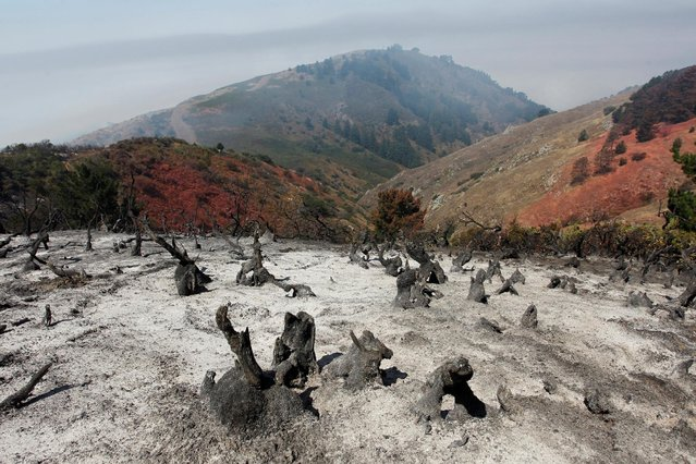 A charred slope smolders after the Soberanes Fire burned through the area in the mountains above Carmel Highlands, California, U.S. July 28, 2016. (Photo by Michael Fiala/Reuters)