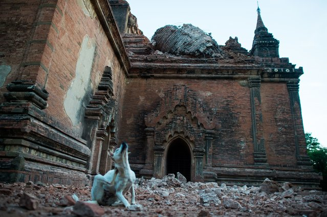 Collapsed walls are seen surrounding the ancient pagoda of Sulamani after a 6.8 magnitude earthquake hit Bagan, on August 25, 2016. (Photo by Ye Aung Thu/AFP Photo)