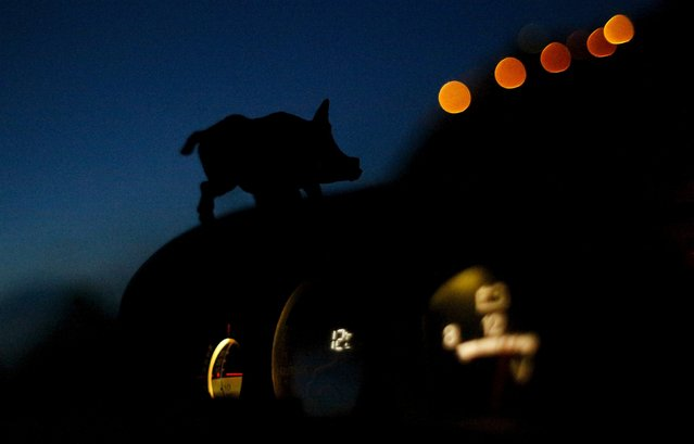 A small figurine of a wild boar is glued on the dashboard of a hunter's car during the first day of the Italy hunting season in Castell'Azzara, Tuscany, central Italy September 20, 2015. (Photo by Max Rossi/Reuters)