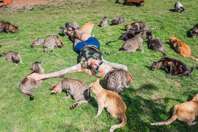 Hannah Shaw aka Kitten Lady, 30, is surrounded by rescued cats at the the Lanai Cat Sanctuary in Hawaii. (Photo by Andrew Marttila/Caters News Agency)