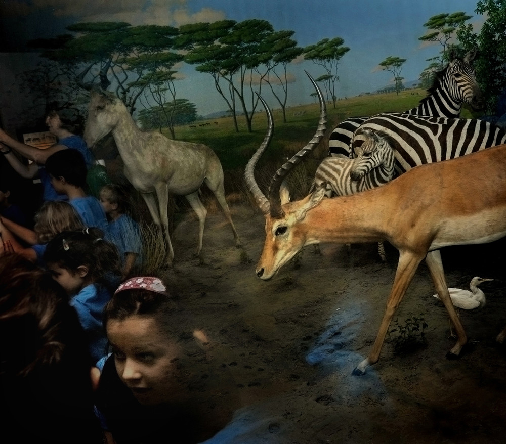 """""""Natural History"""" by Traer Scott"""