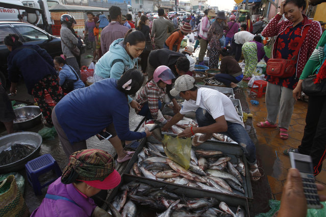 Cambodians buy fishes at a morning fish market in Prek Pnov village on the outskirts of Phnom Penh, Cambodia, Tuesday, January 2, 2018. Cambodians collect fish for making pickled fish, called Prahok, during the fish harvesting season. Prek Pnov is a well-known place for selling fresh water fish as delivering through the main markets in Phnom Penh. (Photo by Heng Sinith/AP Photo)