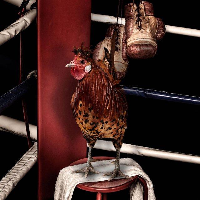 """Nice Pecks"" calendar: Boxing. (Photo by The happy egg co.)"