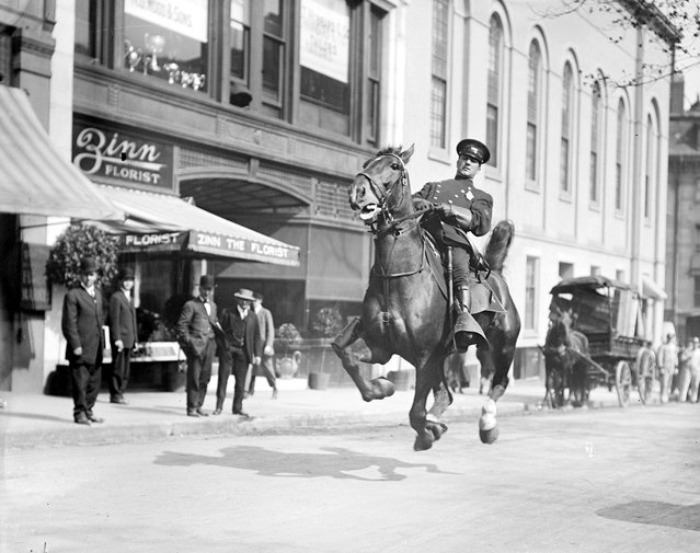 Mounted cop in action on Tremont Street, 1920 – 1929 (approximate). (Photo by Leslie Jones)