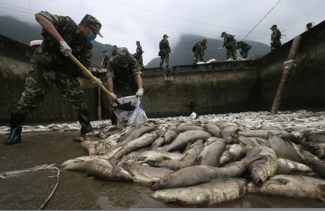 Paramilitary policemen collect dead fishes at an aquaculture facility in Lushan county, after the earthquake hit on Saturday, Ya'an, Sichuan province, April 24, 2013. More than 10 tons of fishes in the facility died as the Qingyi river, the water supply to the facility was cut off by the earthquake. The dead fishes collected will be sterilized and buried underground to avoid causing any possible epidemic. (Photo by Reuters/China Daily)