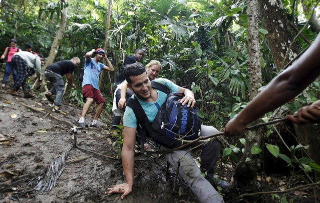 Cuban migrants climb down a slope after they crossed the border from Colombia through the jungle into La Miel, in the province of Guna Yala, Panama November 29, 2015. (Photo by Carlos Jasso/Reuters)
