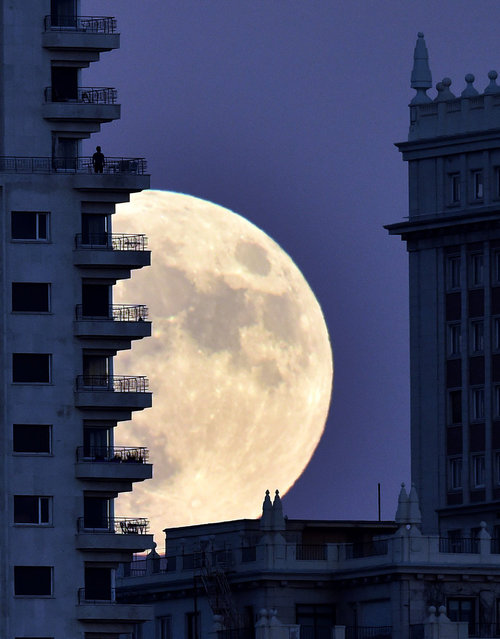 """A man stands on a balcony of a building of Madrid as the moon rises in background, on November 13, 2016, on the eve of a """"supermoon"""". On November 14, 2016, the moon will orbit closer to the earth than at any time since 1948, named a """"supermoon"""", it is defined by a Full or New moon coinciding with the moon's closest approach to the Earth. (Photo by Gerard Julien/AFP Photo)"""