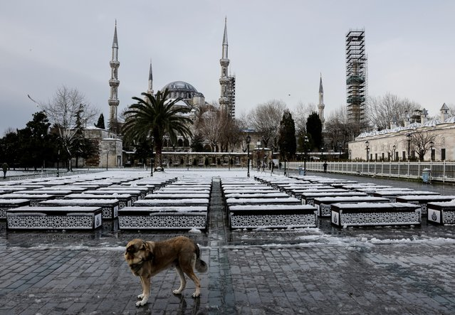 A stray dog stands in front of the Blue Mosque during a snowy day in Istanbul, Turkey, February 15, 2021. (Photo by Umit Bektas/Reuters)
