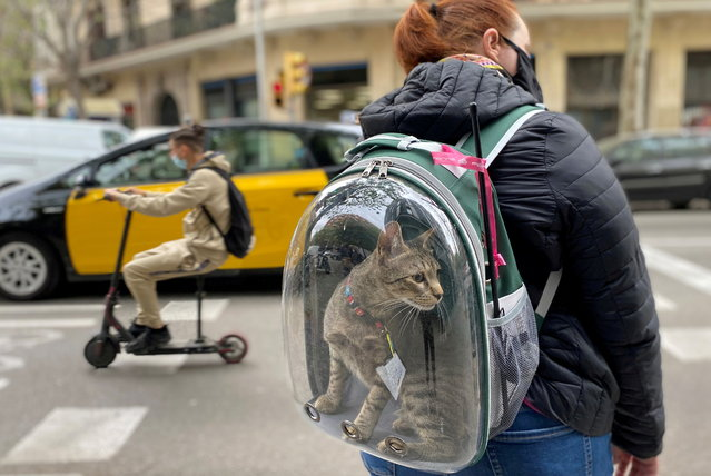 A woman wearing a protective face mask carries her pet cat in a backpack as they wait to cross a street, amid the coronavirus disease (COVID-19) outbreak in Barcelona, Spain on April 9, 2021. (Photo by Nacho Doce/Reuters)