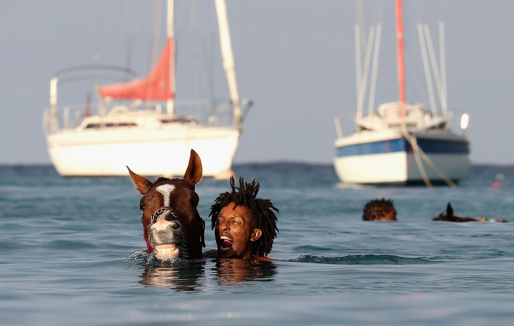 Swimming with Horses