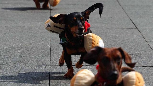 2013 Running of the Wieners