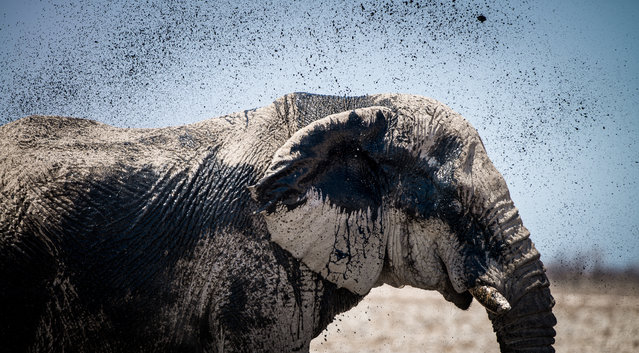 """Body painting"". Elephant spraying water across the body in the Etosha National Park. Photo location: Etosha, Namibia. (Photo and caption by Chris Schmid/National Geographic Photo Contest)"