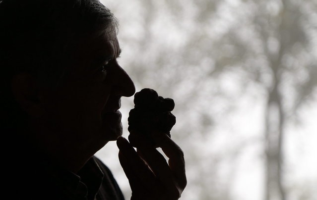 Truffle hunter Ezio Costa, 66, smells a truffle at his restaurant in Monchiero near Alba north-western Italy, November 9, 2013. (Photo by Stefano Rellandini/Reuters)