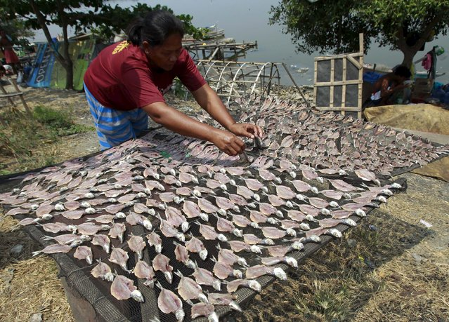 A vendor arranges fish to dry on the side of the a road before delivering it to a wet market in Paranaque city, metro Manila, April 16, 2015. The vendor sells the dried fish at 20 pesos ($0.45) for every 10 pieces. (Photo by Romeo Ranoco/Reuters)