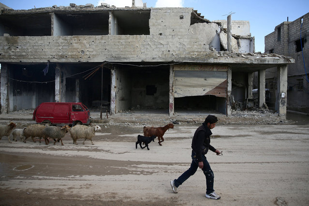 A civilian herds sheep near damaged buildings in the rebel-held besieged Douma neighbourhood of Damascus, Syria February 15, 2017. (Photo by Bassam Khabieh/Reuters)