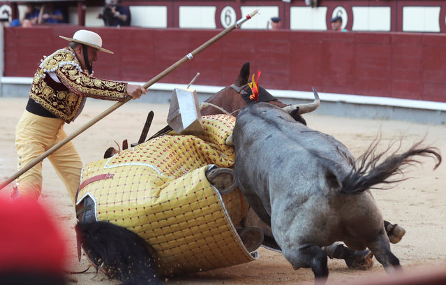 """A """"rejoneador"""" is tossed by the bull during the Feria de San Isidro at the Monumental de Las Ventas bullring in Madrid, Spain,14 May 2019. (Photo by Kiko Huesca/EPA/EFE)"""