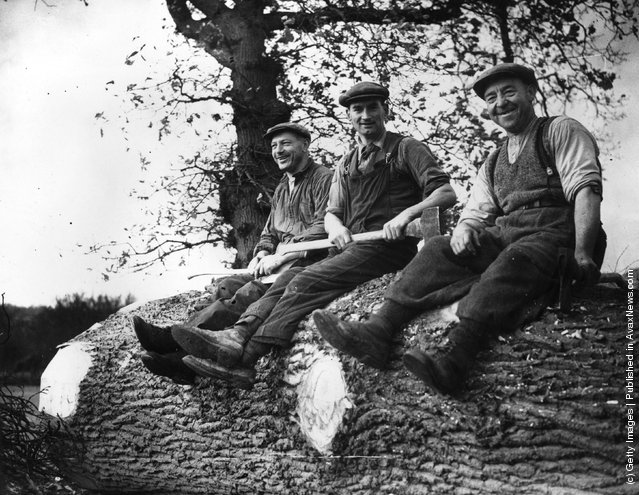 1940: Three former Norwegian whalers working in Gloucester, England as loggers