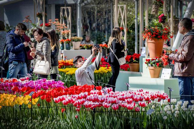 "Tourists visit the Keukenhof Garden in Lisse on March 23, 2017, themed ""Dutch Design"". (Photo by Robin Utrecht/AFP Photo/ANP)"