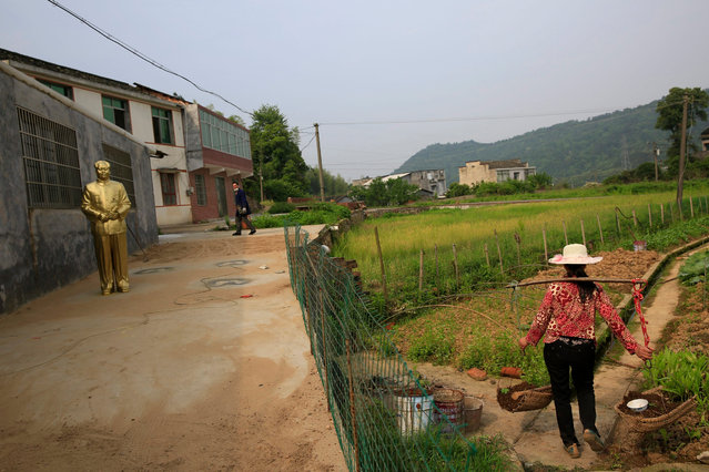 A farmer walks into her farmland as a Mao Zedong statue overlooks the land in Shaoshan, Hunan Province in central China, 29 April 2016. (Photo by How Hwee Young/EPA)