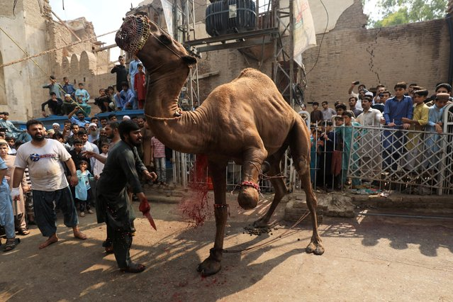 Men and children gather as a camel is being slaughtered in celebration of Eid al-Adha, in Peshawar, Pakistan on August 12, 2019. (Photo by Fayaz Aziz/Reuters)