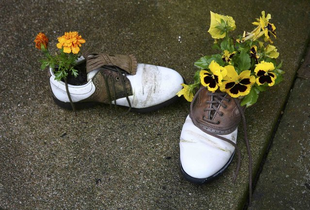 Golf Shoes are used as flower pots outside an office building in St. Andrews, Scotland, July 15, 2015.  The Open, the oldest of four major championships in professional golf,is being held in the town this year. (Photo by Eddie Keogh/Reuters)