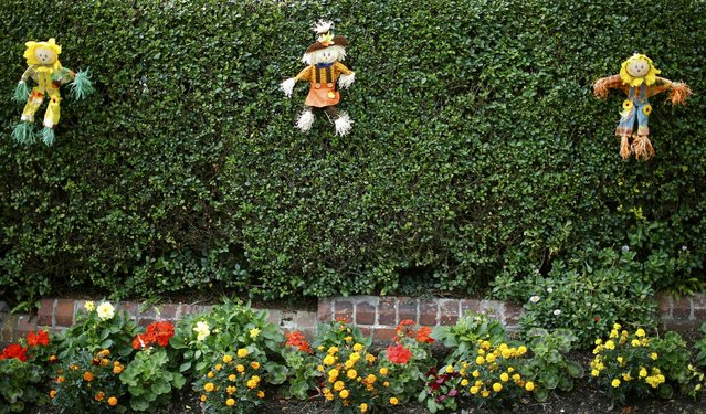 Small scarecrows decorate a hedge during the Scarecrow Festival in Heather, Britain July 29, 2015. (Photo by Darren Staples/Reuters)
