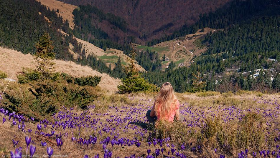 Carpathian Beauty by Daniel Korjonov