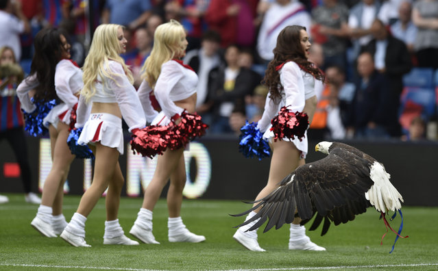 Football, Crystal Palace vs Arsenal, Barclays Premier League, Selhurst Park on August 16, 2015: The eagle flies past the cheerleaders before the game. (Photo by Toby Melville/Reuters/Livepic)