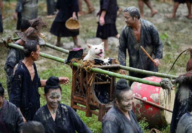 """This photo taken on September 2, 2017 shows people of Miao ethnic minority carrying a dog in a sedan chair during """"Dog carrying Day"""", a traditional local festival, in Jianhe in China's southwestern Guizhou province. Local villagers dressed the dog up in human clothing and carried it by a sedan chair to show respect for all creatures on the festival. (Photo by AFP Photo/Stringer)"""