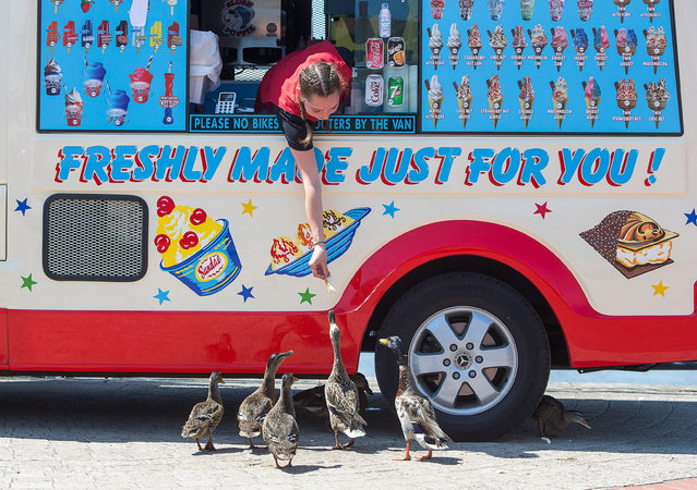 An ice-cream seller in Cardiff Bay, Wales feeds the resident ducks in the sunshine on June 24, 2020, as temperatures rise to 30 degrees on the hottest day of the year. (Photo by Chris Fairweather/Huw Evans/Rex Features/Shutterstock)