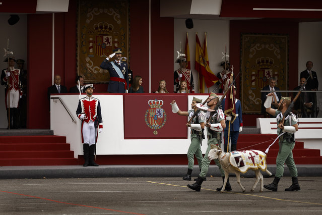 A goat, the mascot of La Legion, an elite unit of the Spanish Army, marches in front of the tribune where Spain's King Felipe, Queen Letizia, Crown Princess Leonor and Princess Sofia attend a military parade during the holiday known as Dia de la Hispanidad, Spain's National Day,  in Madrid, Spain, Sunday, October 12, 2014. (Photo by Daniel Ochoa de Olza/AP Photo)