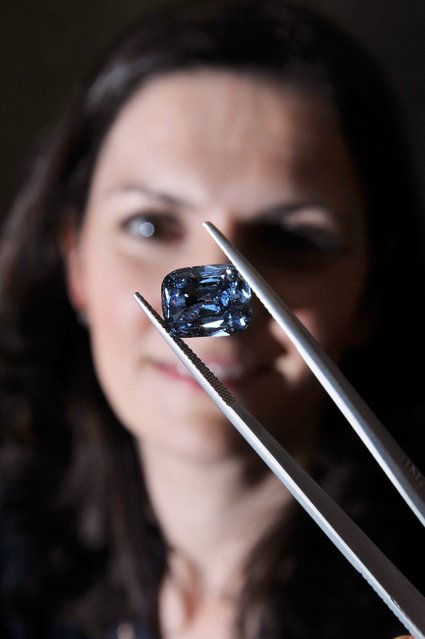 """A female employee of Bonham's Auctioneers in central London studies a rare deep-blue Diamond weighing 5.30 carats, on April 3, 2013. A rare deep-blue diamond ring worth more than £1 million could make history when it goes on sale this month. The """"fancy"""" diamond weighs 5.30 carats and was set in a Trombino ring made by renowned Italian jeweller Bulgari, who is favoured by Hollywood film stars. The term fancy is used to describe a diamond of intense colour and the colour fancy deep-blue is one of the rarest in the world. Blue diamonds are structurally very pure and account for less than 1% of all diamonds mined.The ring is thought to have been made in 1965 and is estimated to fetch up to £1.5 million at Bonhams Fine Jewellery sale on April 24. (Photo by John Stillwell/PA Wire)"""