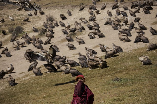A Tibetan Buddhist monk protects himself from the smell of decomposing bodies as vultures come from skies for a sky burial near the Larung valley located some 3700 to 4000 metres above the sea level in Sertar county, Garze Tibetan Autonomous Prefecture, Sichuan province, China October 31, 2015. (Photo by Damir Sagolj/Reuters)