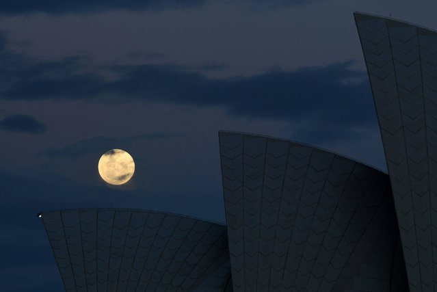 """The """"supermoon"""" rises over the sails of the Sydney Opera House on November 14, 2016. Skygazers headed to high-rise buildings, ancient forts and beaches on November 14 to witness the closest """"supermoon"""" to Earth in almost seven decades, hoping for dramatic photos and spectacular surf. The moon will be the closest to Earth since 1948 at a distance of 356,509 kilometres (221,524 miles), creating what NASA described as """"an extra-supermoon"""". (Photo by William West/AFP Photo)"""