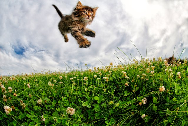 """GummiBear. """"Using the studio's email network, we blasted out the kitten pics and info to our colleagues"""". (Photo by  Seth Casteel/Hachette Australia)"""