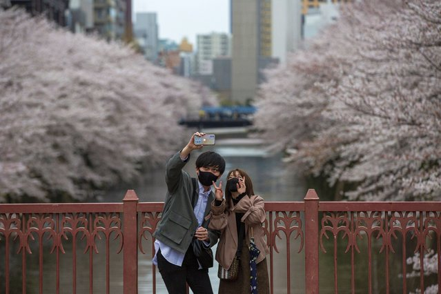 People wearing protective masks to help curb the spread of the coronavirus take a selfie on a bridge as cherry blossoms bloom over Meguro River Sunday, March 28, 2021, in Tokyo. Cherry blossoms in many parts of Japan used to reach its prime in April just as the country celebrates the start of its new school and business year. Today, they bloom earlier in the spring and are mostly gone for the occasion, most likely because of the climate change. (Photo by Kiichiro Sato/AP Photo)