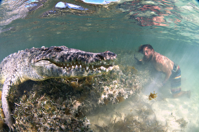 A photographer with a passion for wild animals was able to get up close and personal with one of nature's deadliest creatures. Alex Suh has traveled to Mexico's Banco Chinchorro reef twice in the past three years to get into the waters and capture the crocodiles in their natural habitat after an invitation from Yucatan Dive Trek. The pictures show the photographer just inches away from the carnivorous crocs, who seem more than happy to pose for the camera. Here: The pictures, taken in July 2018, show the photographer just inches away from the carnivorous crocs, who seem more than happy to pose for the camera. (Photo by Alex Suh/Caters News Agency)