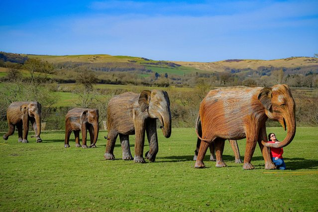 Winchcombe resident Amanda Houghton-Brown admires a herd of life-size elephant figures created by international conservation charity Elephant Family on display at Sudeley Castle in Winchcombe, Gloucestershire, as she takes her morning dog walk on Tuesday, March 30, 2021. (Photo by Ben Birchall/PA Images via Getty Images)