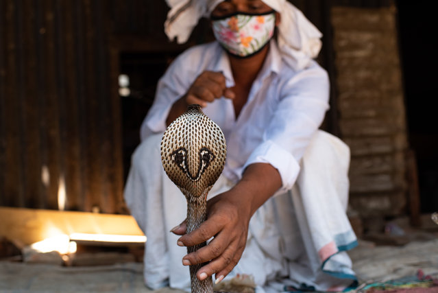 """A gypsy man doing their traditional performance with a Cobra snack during the outbreak of coronavirus disease (COVID-19) at Savar the outskirts of Capital Dhaka, Bangladesh on April 24, 2021. The river gypsies in Bangladesh locally known as """"Bede"""" community. (Photo by Fatima-Tuj Johora/ZUMA Wire/Rex Features/Shutterstock)"""