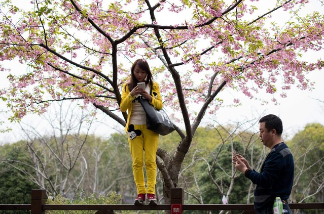 """A young woman (C) takes a """"selfie"""" in front of blossoming trees during the first day of the nearly one month-long Cherry Blossom Festival in Gucun Park in northern Shanghai on March 18, 2015. (Photo by Johannes Eisele/AFP Photo)"""