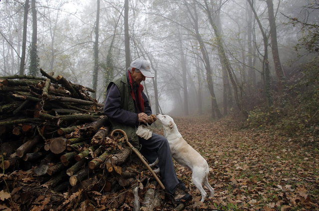 Truffle hunter Ezio Costa, 66, inspects a truffle that was found by his dog Jolly in the woods in Monchiero near Alba northwestern Italy November 9, 2013. (Photo by Stefano Rellandini/Reuters)