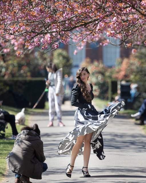 A woman poses in an avenue of cherry blossom trees in Greenwich Park, south east London, United Kingdom on April 18, 2021. (Photo by London News Pictures)