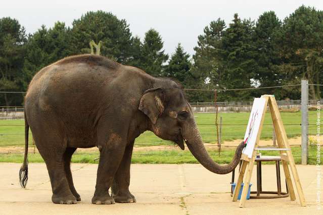 Painting Elelphant