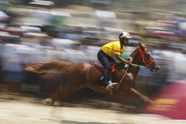 A man on a horse takes part in a race during a horse and ox-cart racing festival outside Yangon April 26, 2015. (Photo by Soe Zeya Tun/Reuters)