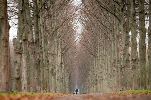 A man walks his dog past trees in Herrenhausen gardens in Hannover, Germany on December 2, 2019. (Photo by Sina Schuldt/dpa)