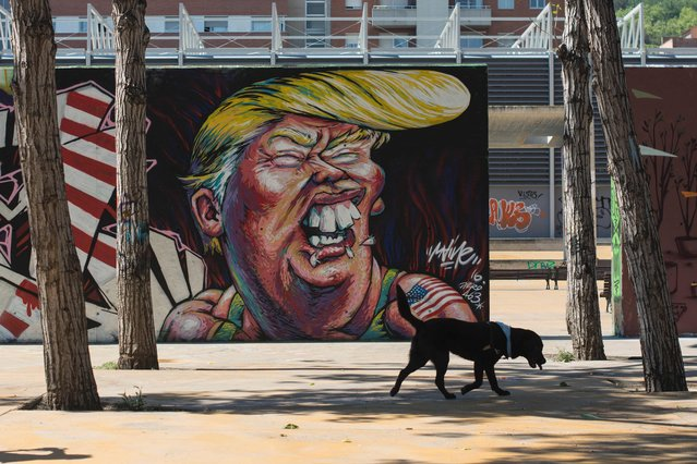 A dog passes by a graffiti of Republican presidential candidate Donald Trump in Barcelona on June 7, 2016. (Photo by Josep Lago/AFP Photo)